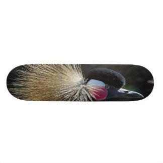 bird board skateboard
