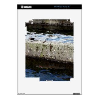 Bird Bridge iPad 2 Decals