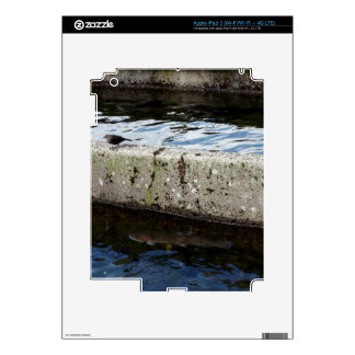 Bird Bridge Skins For iPad 3