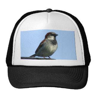 Bird Cap Trucker Hat
