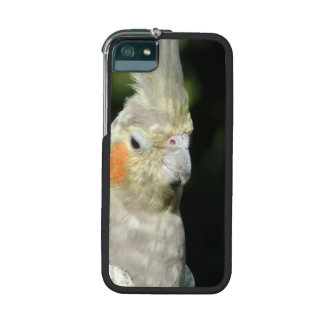 Bird Cover For iPhone 5/5S