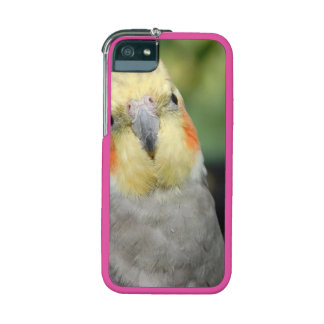 Bird iPhone 5/5S Case