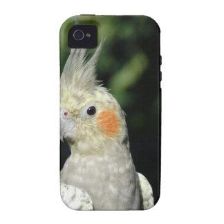 Bird Vibe iPhone 4 Covers