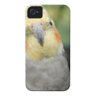 Bird iPhone 4 Case-Mate Case
