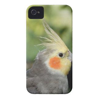 Bird Case-Mate iPhone 4 Cases