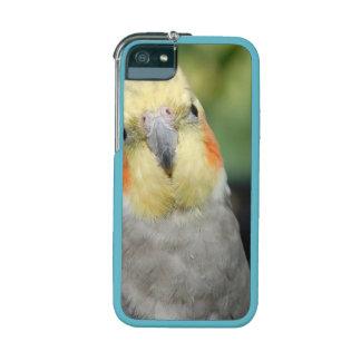 Bird Case For iPhone 5
