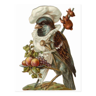 Bird Chef Postcard