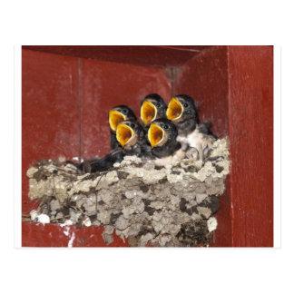 Bird Choir Postcard