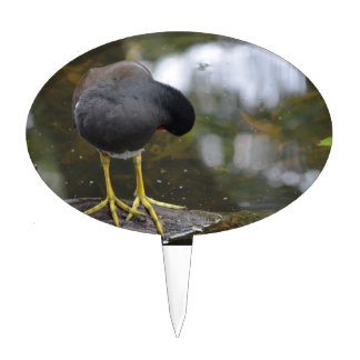 bird cleaning itself yellow feet picture cake toppers