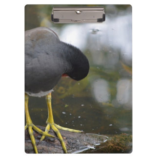 bird cleaning itself yellow feet picture clipboards