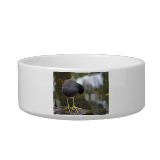 bird cleaning itself yellow feet picture pet bowls