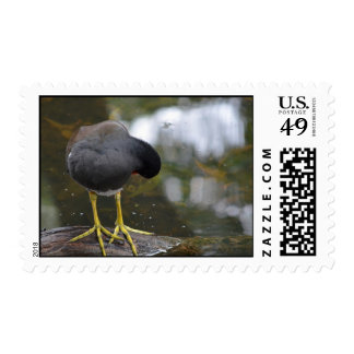 bird cleaning itself yellow feet picture postage