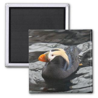 Bird-CuteTufted Puffin 2 Inch Square Magnet