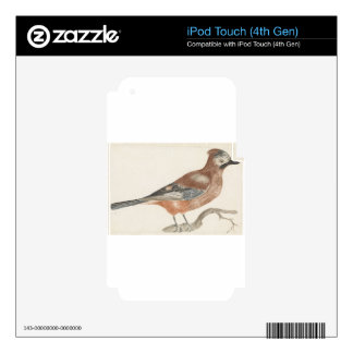 Bird Decal For iPod Touch 4G