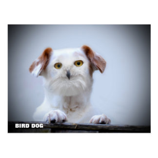 Bird Dog Postcard
