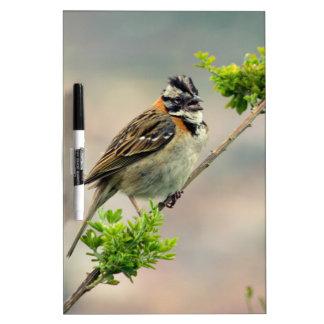 Bird Dry Erase Board