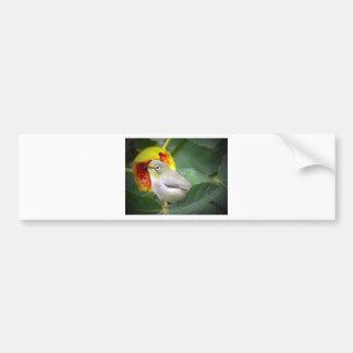 Bird Eating A Fig Bumper Sticker