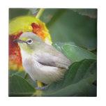 Bird Eating A Fig Ceramic Tile