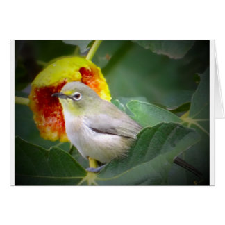 Bird Eating A Fig Greeting Card