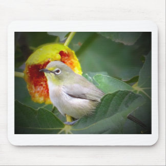 Bird Eating A Fig Mouse Pad