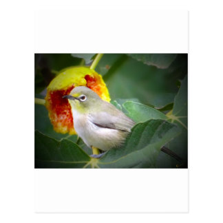 Bird Eating A Fig Post Card
