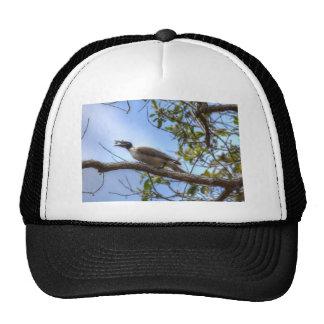 BIRD EATING INSECT RURAL QUEENSLAND AUSTRALIA TRUCKER HAT