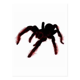 Bird Eating Spider Postcard