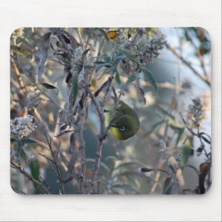 Bird Eating The Sweet Nectar Of Life Mouse Pad