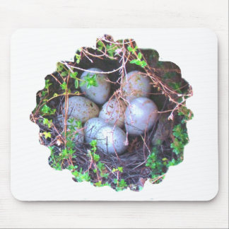 Bird eggs in Nest digital nature photo Mouse Pad