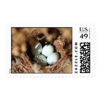 Bird Eggs Nest Postage Stamp