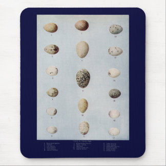 Bird Eggs Plate B Vintage Natural History Mouse Pad