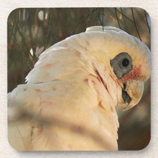 Bird Eyes Coaster