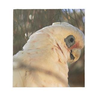 Bird Eyes Notepad