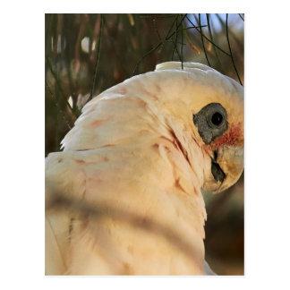 Bird Eyes Postcard