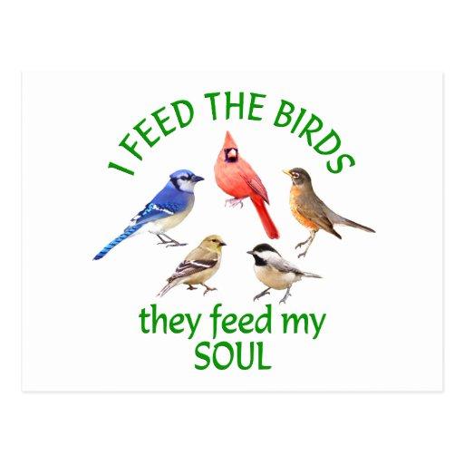 BIRD FEEDER POST CARD