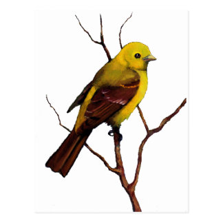 Bird: Female Western Tanager: Original Art Postcard
