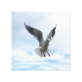 bird fly in the sky canvas print
