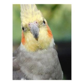 Bird Custom Flyer