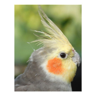 Bird Flyer