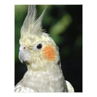 Bird Full Color Flyer