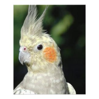 Bird Flyers