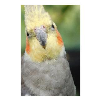 Bird Flyer Design
