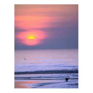 Bird Flying Over Sea Post Card