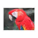 Bird Gallery Wrap Canvas