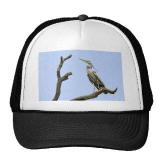 Bird Great Blue Heron Ball Cap Trucker Hat