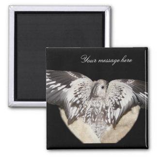 Bird Heart Magnets