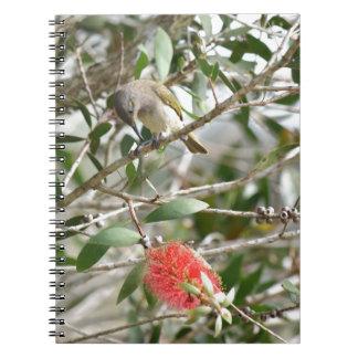 BIRD HONEY EATRE & BOTTLE BRUSH AUSTRALIA NOTEBOOK