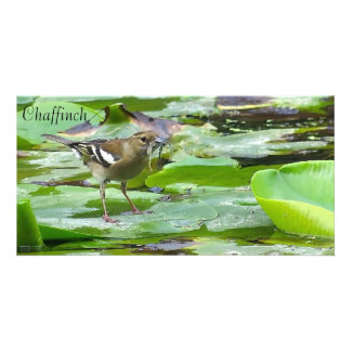 Bird Image for photo card