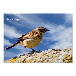 Bird Image for poster