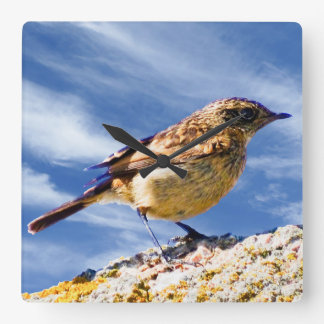 Bird Image for Square-Wall-Clock Square Wall Clock